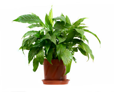 Bring in house plants